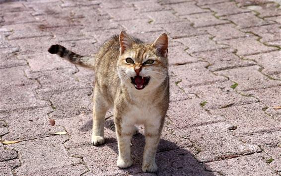 Wallpaper Cat indignation