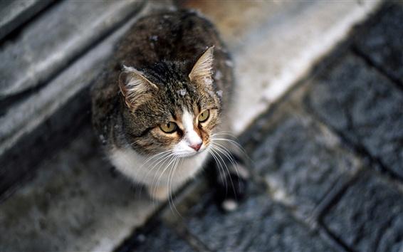 Fond d'écran Cat s'asseoir et regarder