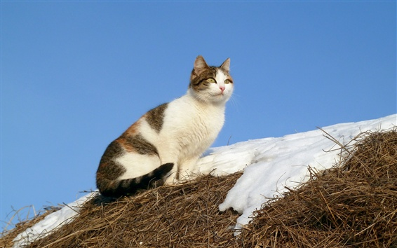Wallpaper Cat, snow, grass
