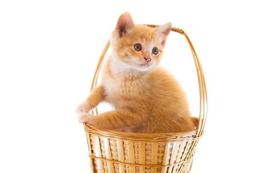 Wallpaper Cute kitten in basket, white background