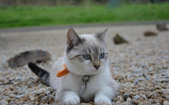 배경 화면 귀여운 새끼 고양이, 돌
