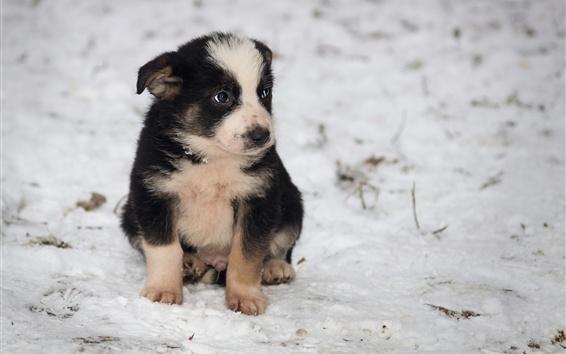 Wallpaper Cute puppy sit on ground, snow, winter