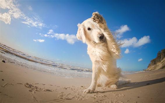 Обои Собака, ноги, пляж, море, голубое небо