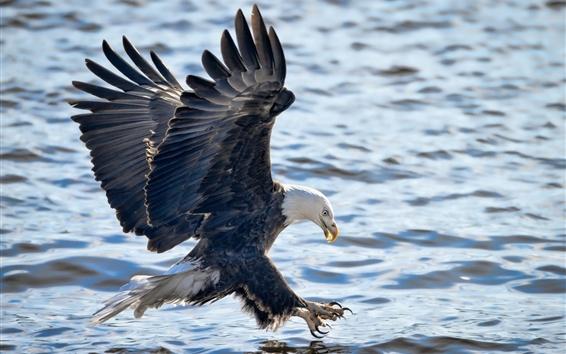 Papéis de Parede Eagle voo, asas, lago, água