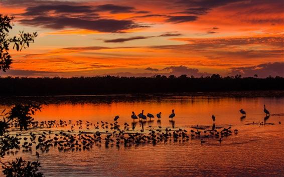 Fond d'écran Soirée, oiseaux, lac, ciel rouge, coucher de soleil