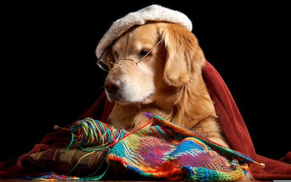 Wallpaper Funny dog, retriever, glasses, hat, knitting