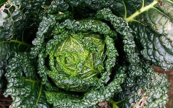 Wallpaper Green cabbage, vegetables