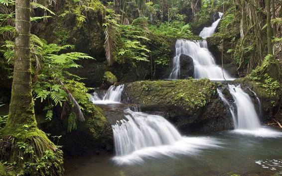 Wallpaper Hawaii, waterfall, stream, moss, trees