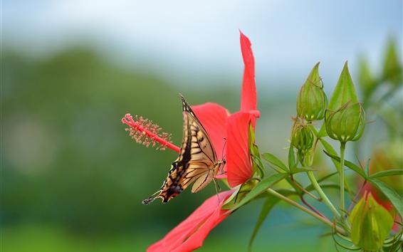 Papéis de Parede Hibisco, flor vermelha, borboleta, andorinha