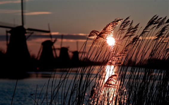 Wallpaper Holland, windmill, reed, river, sun