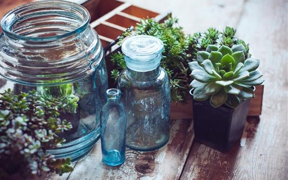 Wallpaper Houseplant, succulent plants, bottles