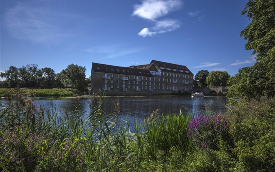 Wallpaper Huntingdon, England, Cambridge, river, reed