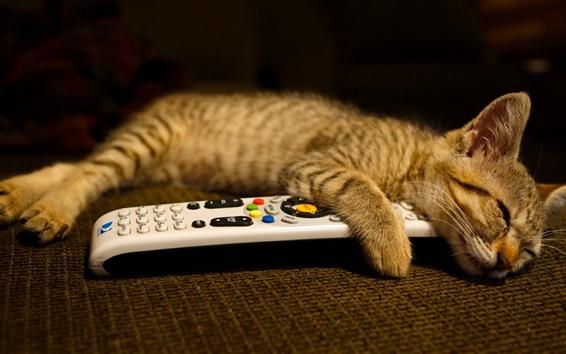 壁紙 子猫は、リモートで休息