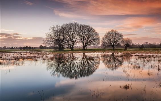 Papéis de Parede Lago, árvores, reflexão da água, amanhecer