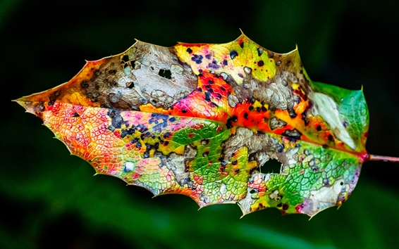 Papéis de Parede Folhas, coloridas