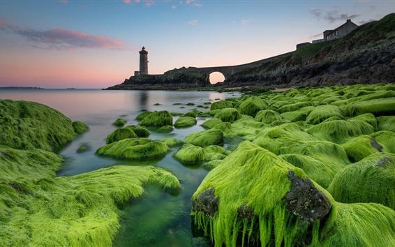 Wallpaper Lighthouse, moss, stones, sea