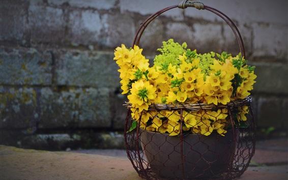 壁紙 リシマキア黄色の花、バスケット、装飾