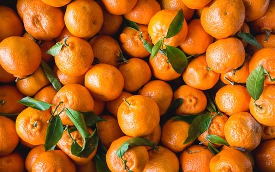 Wallpaper Many citrus, fresh fruit