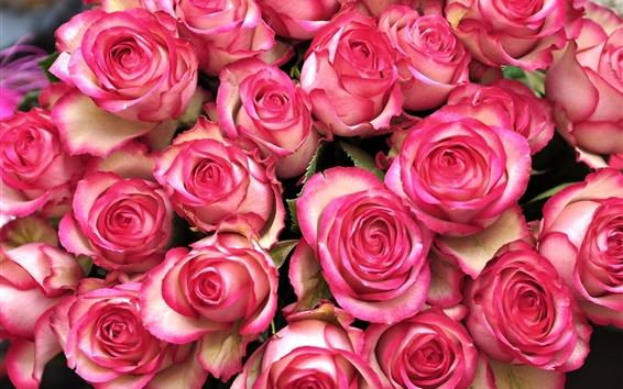 Papéis de Parede Muitas flores rosa rosa, buquê