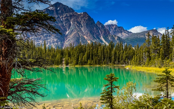 Wallpaper Mountains, trees, lake, nature landscape