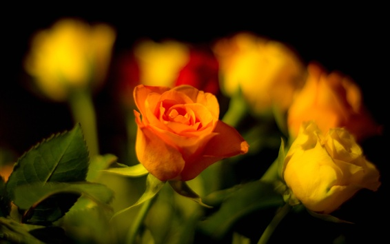 Wallpaper Orange and yellow roses