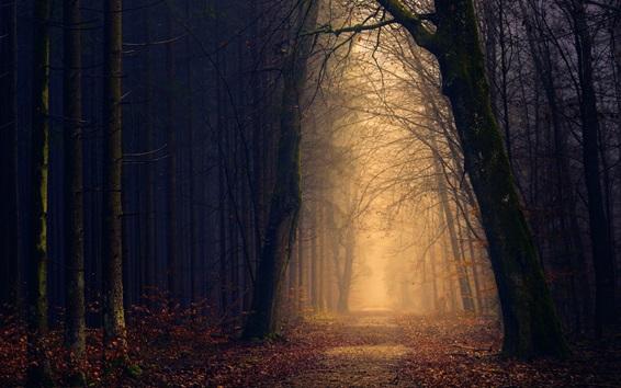 Обои Парк, деревья, тропинка, туман, осень
