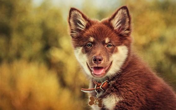 Papéis de Parede Pet, brown view de cachorro