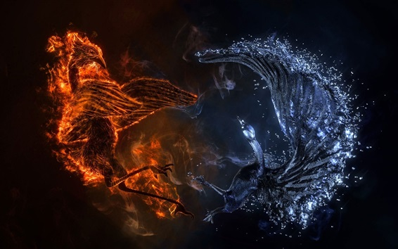 Wallpaper Phoenix and swan, fire and water, creative design