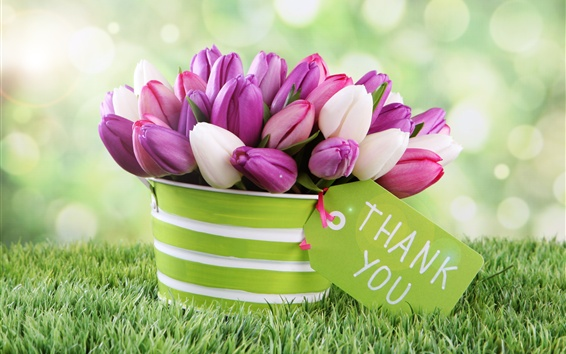 Wallpaper Pink and white tulips, flowers, bucket