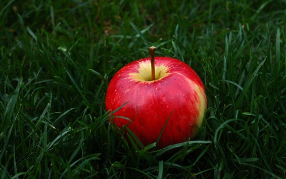 Wallpaper Red apple in the grass
