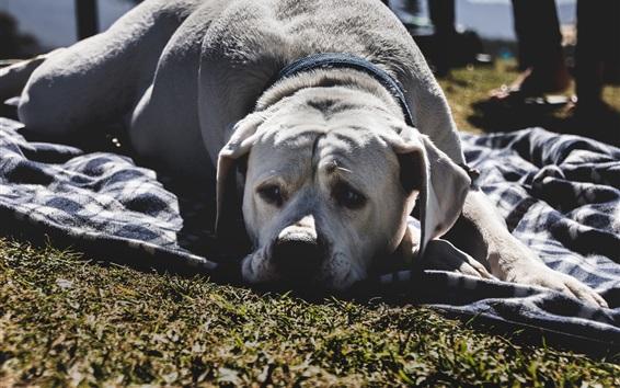 Papéis de Parede Cão da tristeza