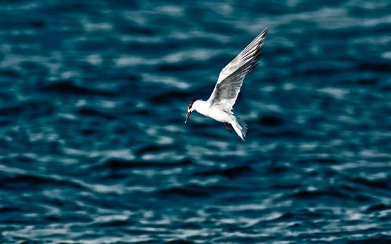 Wallpaper Seagull flight, wings, sea, water