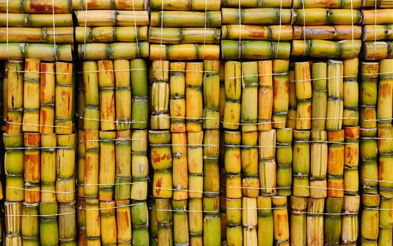 Wallpaper Sugar cane, bamboo background