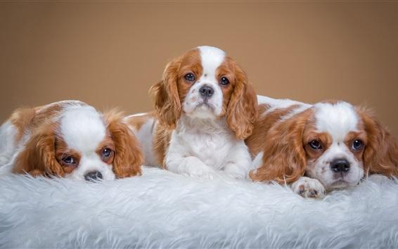 Fondos de pantalla Tres cachorros, encantador