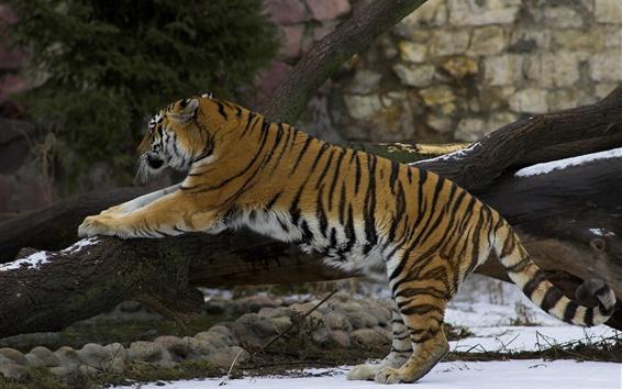 Fond d'écran Montée du tigre, neige, hiver