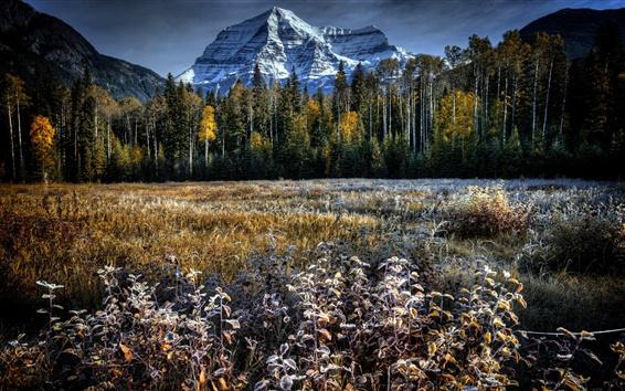 Wallpaper Trees, grass, mountain, frost, autumn