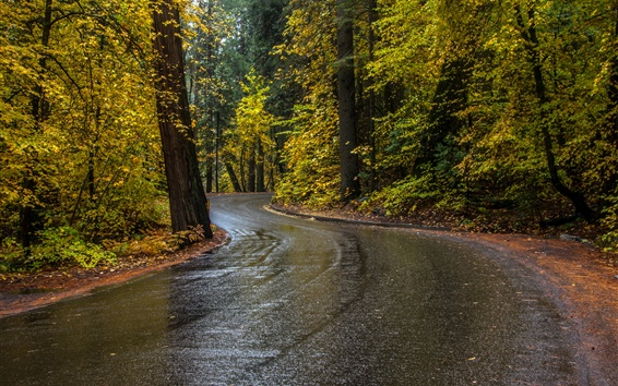 Wallpaper Trees, road, wet, autumn