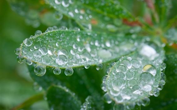 Fond d'écran Gouttes d'eau, feuilles vertes, floues