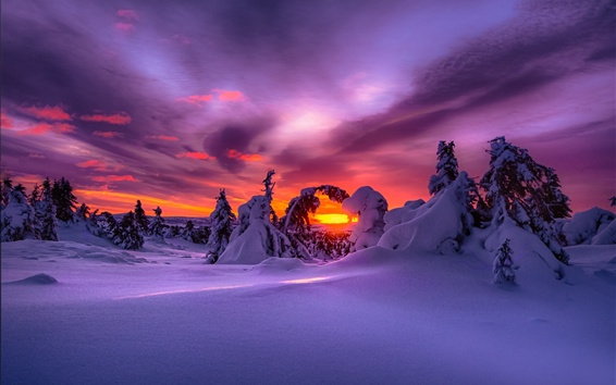 Papéis de Parede Inverno, neve, floresta, pôr-do-sol
