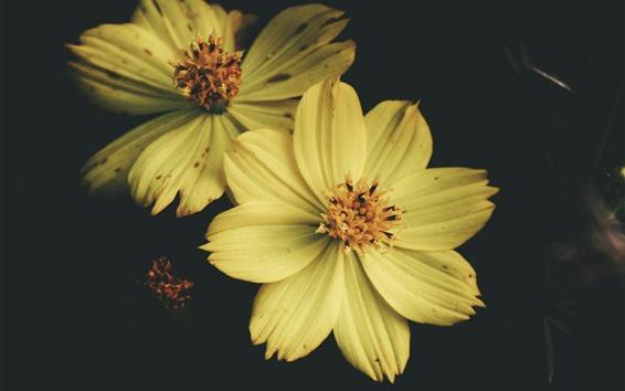 Wallpaper Yellow petals flowers, macro