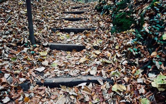Papéis de Parede Outono, folhas, escadas