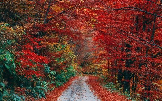 Обои Осень, красные листья, путь, деревья