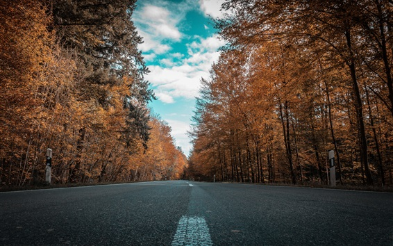 Wallpaper Autumn, road, forest, trees