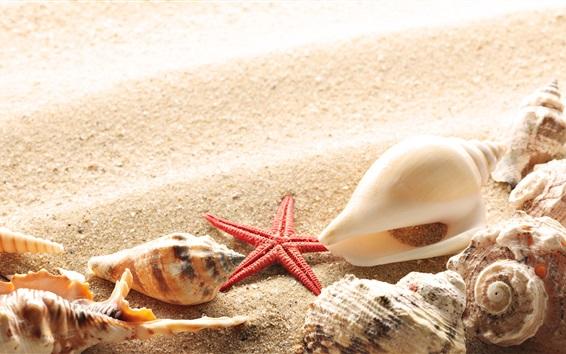壁紙 ビーチ、砂浜、貝殻、ヒトデ