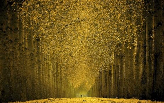 Fondos de pantalla Hermoso otoño, árboles, hojas amarillas, camino