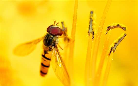 Fond d'écran Abeille, fleur jaune, pistil