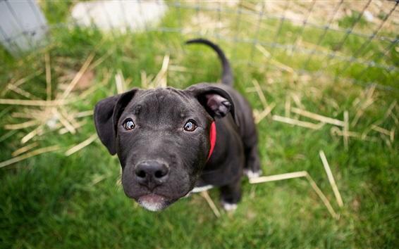 Papéis de Parede Cachorro preto olha para você