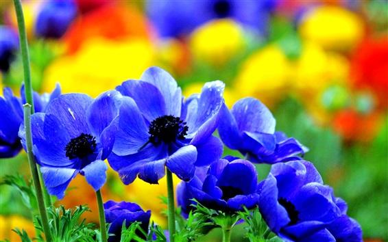 Wallpaper Blue flowers bloom in spring