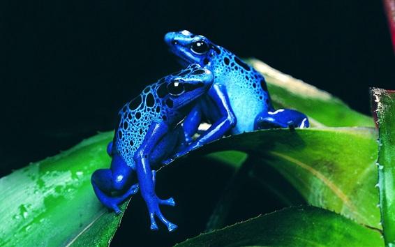 배경 화면 푸른 개구리