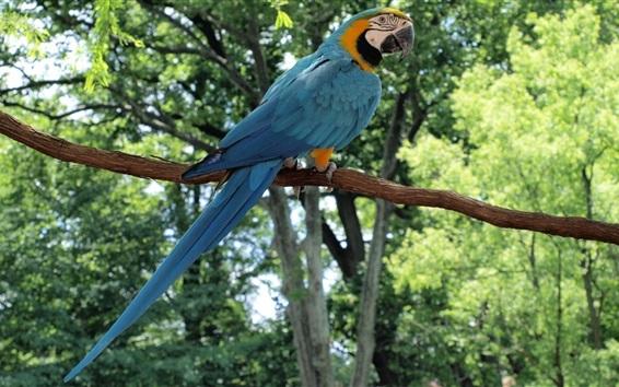 Papéis de Parede Vista traseira do papagaio azul, floresta